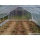 Tunnel one growing season UV2 4m